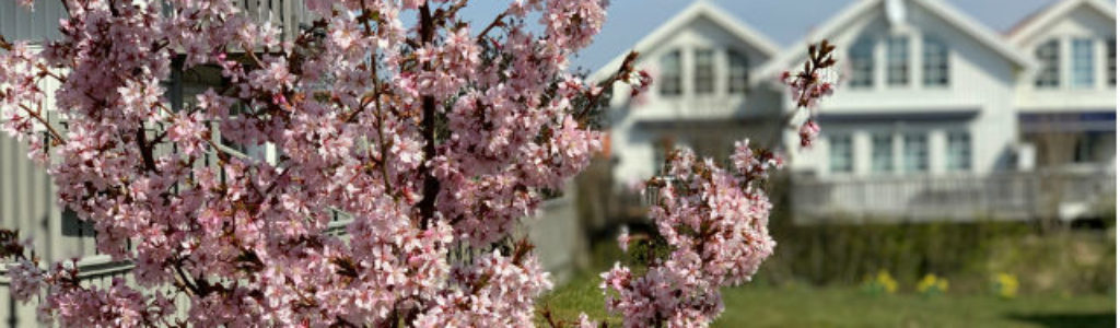 Springtimes 640x420